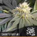 ShortStuff no.1 - Shortstuff Seeds - 5 stk. AutoFem Cannabisfrø
