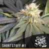 ShortStuff no.1 - Shortstuff Seeds - 20 stk. Regulær Autoflower Cannabisfrø