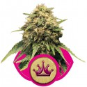 Special Queen 1 - Royal Queen Seeds 1-3-5 & 10 stk.