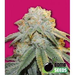 Bubble Bomb - Bomb Seeds - 5 stk. Femi