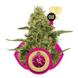 Northern Ligth - Royal Queen Seeds 1-3-5 & 10 stk.