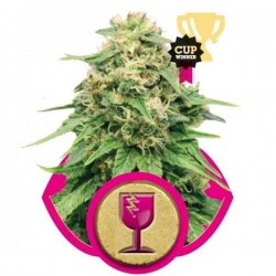 Critical - Royal Queen Seeds 1-3-5 & 10 stk.