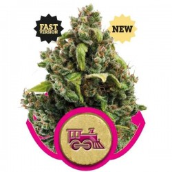 Candy Kush Express (Fast Version) - Royal Queen Seeds - Feminiseret Cannabisfrø