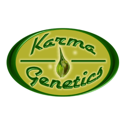 - Karma Genetics - 12 stk. Regular