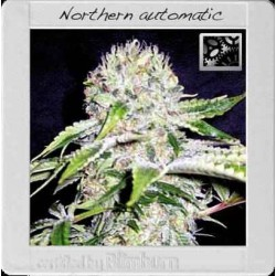 Northern Automatic - Blimburn Seeds - 3, 6 & 9 stk. Autoflower Feminiseret Cannabisfrø