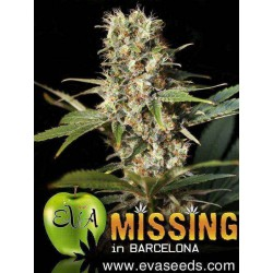 Missing in Barcelona (M.I.B) - Eva Seeds - 3 & 6 stk. Feminiseret Cannabisfrø