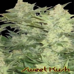 Original Sensible Sweet Kush - Original Sensible Seeds - 5 stk. Feminiseret Cannabisfrø