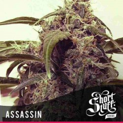 Auto-Assassin - Shortstuff Seeds - 5 stk. AutoFem Cannabisfrø