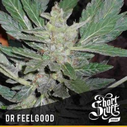 Dr. Feelgood - Shortstuff Seeds - 5 stk. AutoFem Medicinsk Cannabisfrø