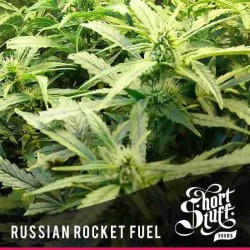 Russian Rocket Fuel - Shortstuff Seeds - 5 stk. AutoFem Cannabisfrø