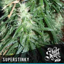 Super Stinky - Shortstuff Seeds - 5 stk. AutoFem Cannabisfrø